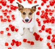 Chien heureux de valentines Photographie stock