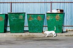 Chien heureux marchant près des déchets Photographie stock libre de droits