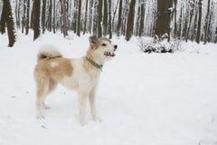 Chien hirsute en parc Saison de l'hiver Photo stock