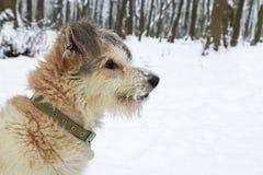 Chien hirsute en parc Saison de l'hiver Images stock