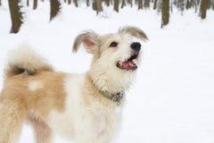 Chien hirsute en parc Saison de l'hiver Photographie stock libre de droits
