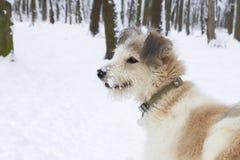 Chien hirsute en parc Saison de l'hiver Photographie stock
