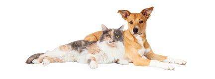 Chien jaune et chat de calicot Photographie stock