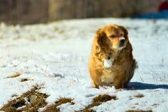 Chien joyeux jouant dans la neige fraîche Photo stock