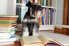 Chien lisant un livre Photos libres de droits