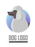 Chien Logo Vector du caniche standard blanc d'isolement Photos stock