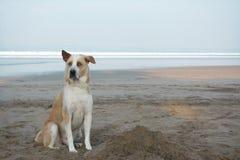 Chien loyal mignon se reposant sur l'avant de plage Photos libres de droits