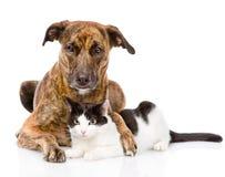 Chien mélangé de race étreignant un chat D'isolement sur le fond blanc Image stock