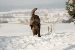 Chien mélangé de race dehors dans la neige Photographie stock libre de droits