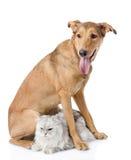 Chien mélangé de race et chat persan ensemble Photo libre de droits