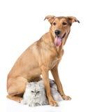Chien mélangé de race et chat persan regarder l'appareil-photo Photos libres de droits
