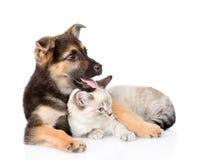 Chien mélangé de race et chat tigré D'isolement sur le fond blanc Images libres de droits