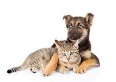 Chien mélangé de race et chat tigré D'isolement sur le fond blanc Photographie stock libre de droits