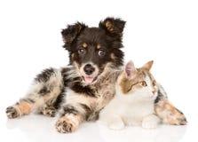 Chien mélangé et chat de race regardant loin D'isolement sur le blanc Photographie stock