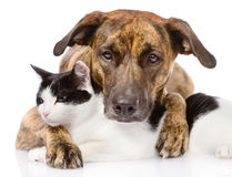 Chien mélangé et chat de race se trouvant ensemble Sur le fond blanc Photographie stock