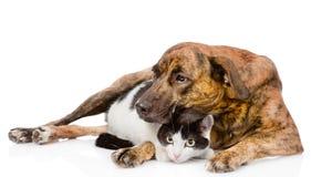 Chien mélangé triste de race étreignant un chat D'isolement sur le fond blanc Photos libres de droits