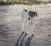 chien métis avec un regard triste Images libres de droits