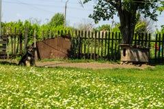 Chien métis sur une chaîne dans le village gardant la ferme Image stock