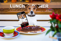 Chien mangeant du gâteau et du thé au selfie resataurant Image libre de droits