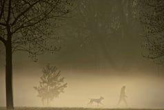 Chien marchant un matin brumeux Photos stock