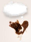 Chien mignon avec la bulle vide de nuage Images libres de droits