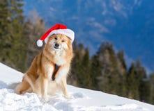 Chien mignon dans le chapeau de Noël Image libre de droits