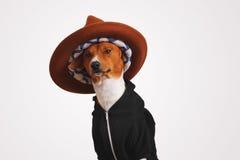 Chien mignon dans le hoodie et le chapeau de chapeau feutré Photographie stock libre de droits