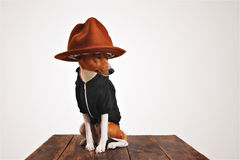 Chien mignon dans le hoodie et le chapeau de chapeau feutré Photographie stock