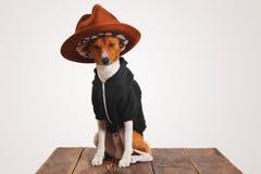 Chien mignon dans le hoodie et le chapeau de chapeau feutré Images libres de droits