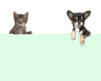 Chien mignon de chiwawa et chat tigré de bébé accrochant au-dessus d'une frontière de Livre vert Images stock