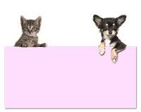 Chien mignon de chiwawa et un chat tigré de bébé tenant un carton rose Image libre de droits