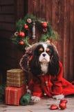 Chien mignon de Noël avec des cadeaux et des décorations sur le fond en bois rustique Photo libre de droits