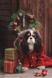 Chien mignon de Noël avec des cadeaux et des décorations sur le fond en bois rustique Photographie stock libre de droits