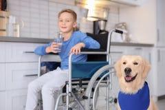 Chien mignon de service et garçon brouillé dans le fauteuil roulant Photo stock