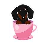 Chien mignon de teckel dans la tasse de thé rose, illustration, ensemble pour la mode de bébé Photographie stock libre de droits