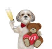 Chien mignon de valentine avec l'ours d'isolement sur le blanc Photographie stock libre de droits