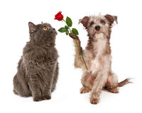 Chien mignon donnant la fleur à un chat Images libres de droits