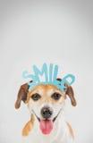 Chien mignon drôle de soutien heureux de sourire Photos libres de droits