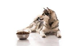 Chien mignon et sa nourriture sèche préférée sur un fond blanc Photos stock