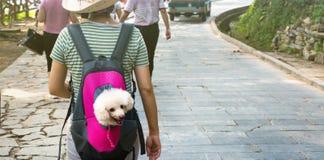 Chien mignon jetant un coup d'oeil du sac à dos de transport Photo libre de droits