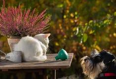 Chien mignon regardant le petit chat blanc Photographie stock libre de droits