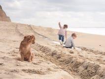Chien mignon s'occupant des enfants heureux jouant sur la plage des vacances Images stock