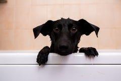 Chien mignon se tenant dans la baignoire attendant pour être lavé image stock