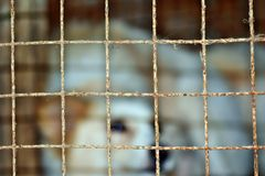 Chien mignon seul à l'intérieur de vieille cage Images stock