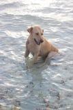Chien mignon sur la plage Photographie stock libre de droits