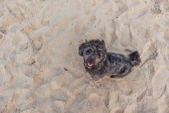 Chien noir avec le sable de plage Image libre de droits