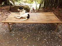 """chien noir et blanc d'ร de """"de ƒà¸ de ¹ d'à se reposant sur une table en bambou, images libres de droits"""