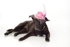 Chien noir et mélangé de race avec le chapeau de fantaisie de Fascinator Photo libre de droits