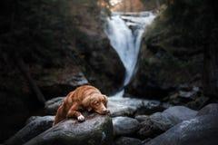 Chien par la cascade Animal familier sur la nature par l'eau Images stock