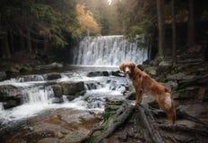 Chien par la cascade Animal familier sur la nature par l'eau Image stock